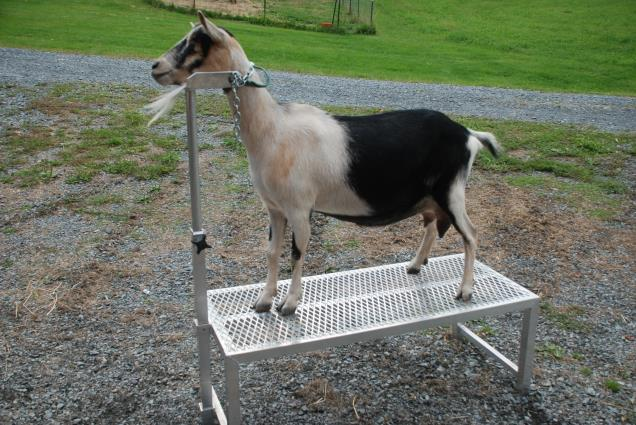 how to build a sheep fitting stand